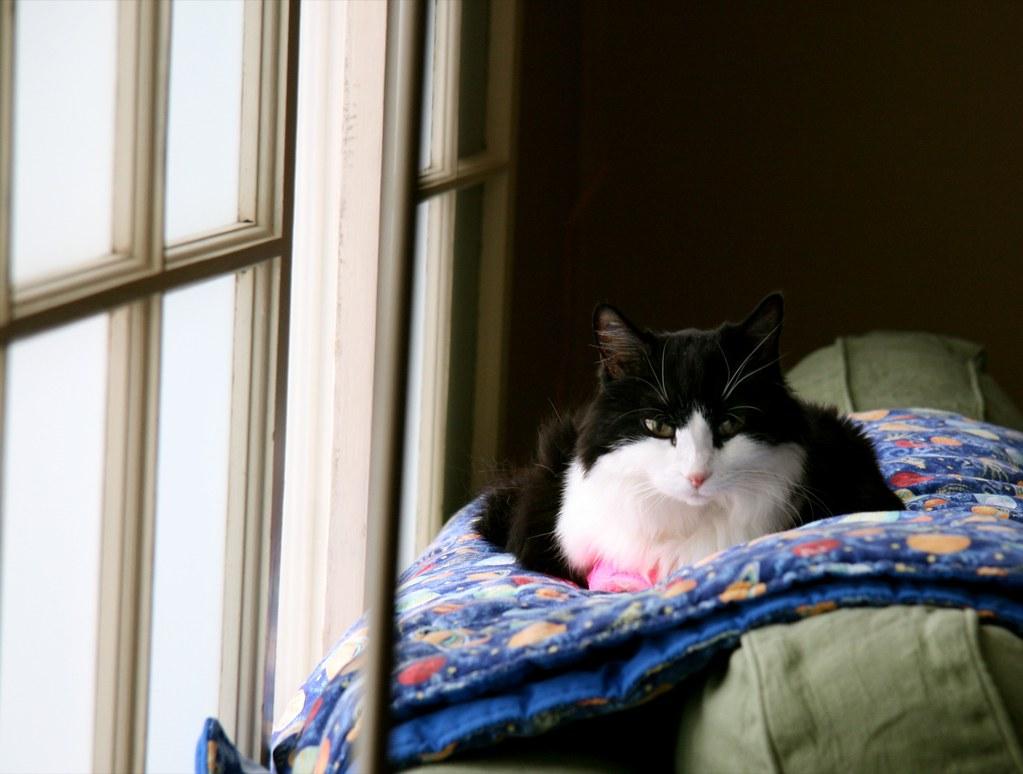 doenças mais comuns em gatos