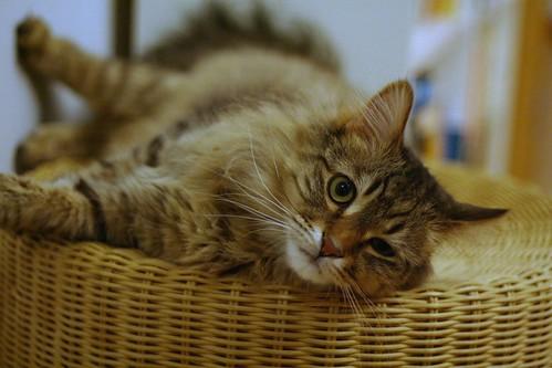 My Cat: Neo 小新 | by Taekwonweirdo