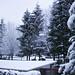 Snowy Day - Dec 1 2007