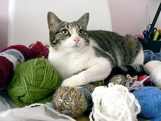 """Knit me a cat bed please..."" 