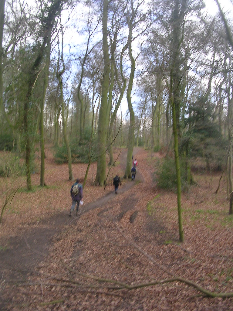 Through Lambridge Wood Shiplake to Henley