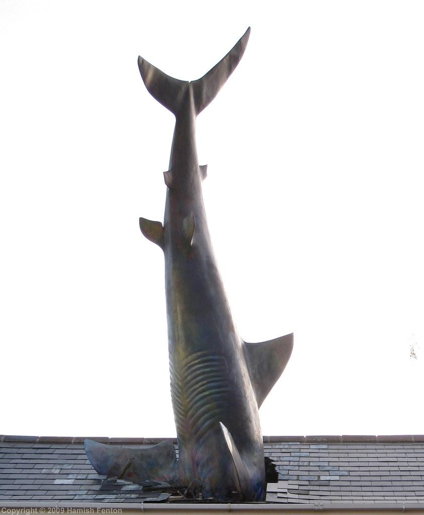 Un requin attaque une maison 3847396191_b26fdfeba1_b