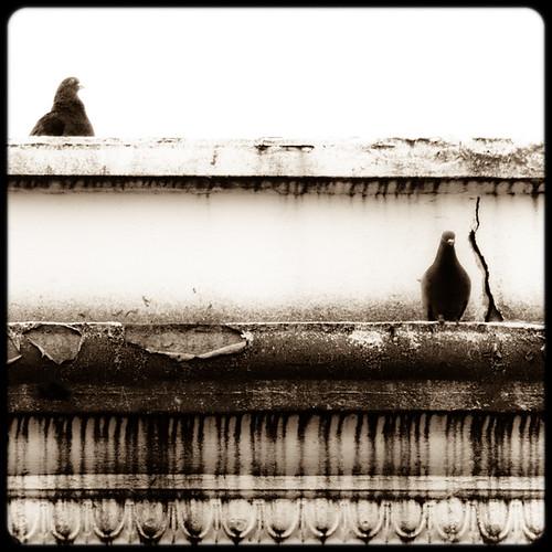 roof bw art birds animals washington downtown pigeons border decoration aberdeen toned tinted oldbuilding schnoor decorativemoulding simplelogic