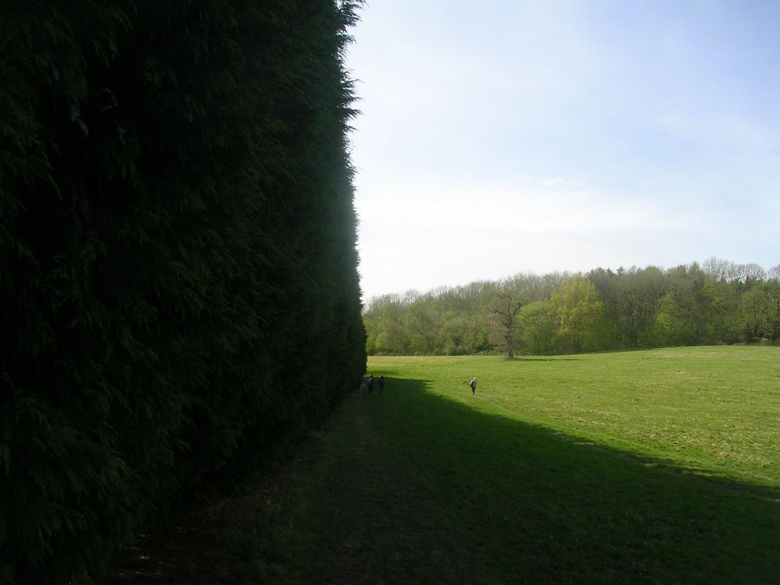 High hedge Yalding to Sevenoaks