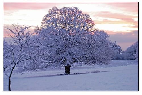 snow tree | by Ryan McD