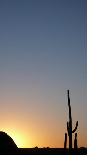 leica arizona cactus southwest sunrise skyscape landscape dawn desert americana scottsdale camelbackmountain camelback scottsdalearizona americansouthwest dlux3 arizonalandscape leicadlux3 lpsolitude
