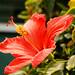 Plants and Flowers (Manhattan Beach)