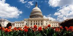USA - Washington DC - Capitol panorama by Darrell Godliman
