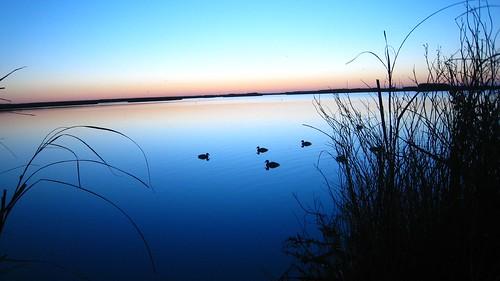 morning sunrise catchycolors duck glow texas marsh decoy duckdecoy top20texas bestoftexas