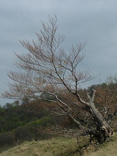 Strom nad Boromlakem