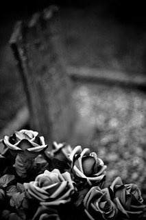 Roses   by rymus