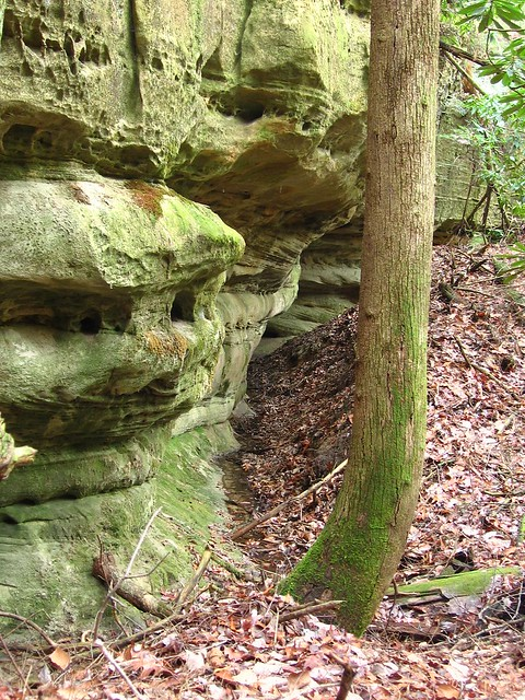 Sandstone bluff, Middle Creek Trail, Big South Fork NRRA, Fentress Co, TN