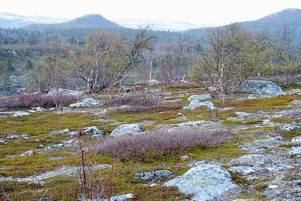 Stabbursdalen National Park - 3
