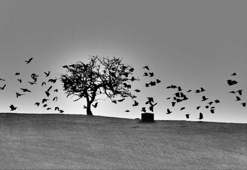 ohio bw abandoned film blackwhite shaker crows tp dayton corvusbrachyrhynchos printscan kodaktechpan gáagii