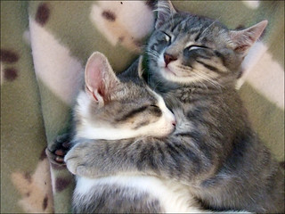 Hug - Abbraccio