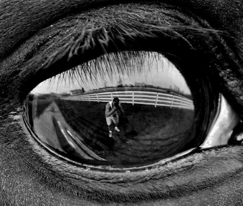 blackandwhite horse reflection eye reflecting newjersey innocent horseeye horsefarm coltsneck eyereflection mikequinn thoroughbredeye farmreflection inncoenteyes rememberthatmomentlevel1