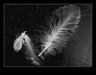 feather | by wolfgangfoto