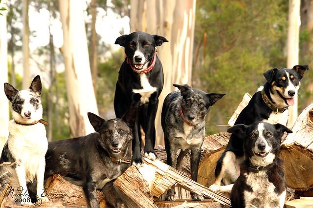 The Wonnangatta Working Dog Team