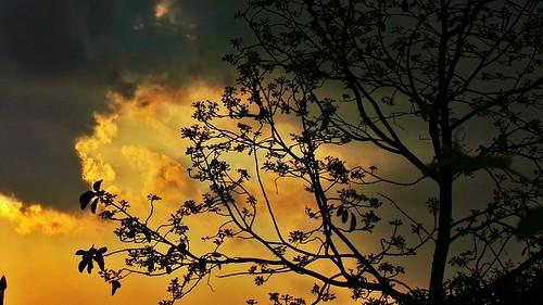 orange silhouette clouds golden skies shadows rizal antipolo gc100 flickrandroidapp:filter=none samsunggalaxycamera lorescountryhomes