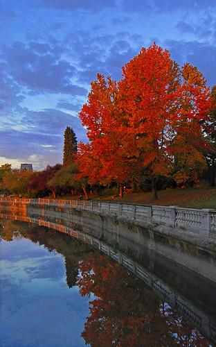 red color reflection tree fall vancouver abigfave superaplus aplusphoto colourartaward
