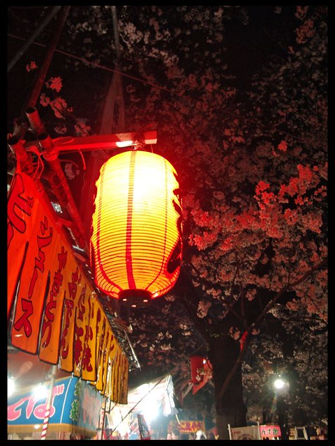 Lantern and cherry trees
