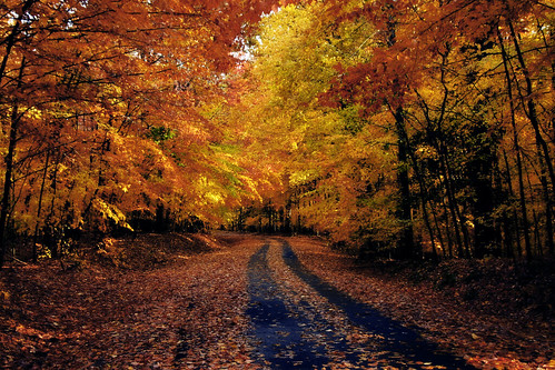 road autumn orange fall leaves yellow virginia va 2007 fairfaxva easternnorthamericanature fairfaxcountyva mywinners abigfave anawesomeshot fountianhead impressedbeauty aplusphoto onlythebestare platinumheartaward goldstaraward