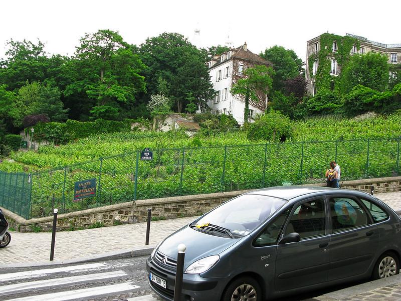 Montmartre vineyard