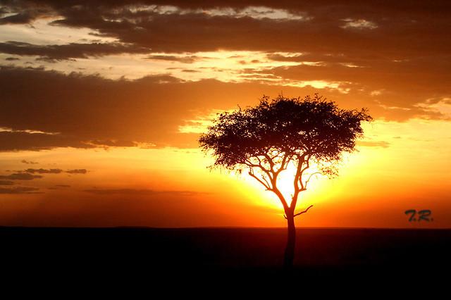Sundown in the Masai Mara