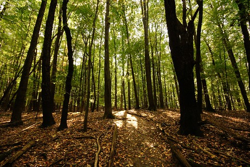 orange sunlight green fall leaves dark woods peace forrest path michigan deep trail erda