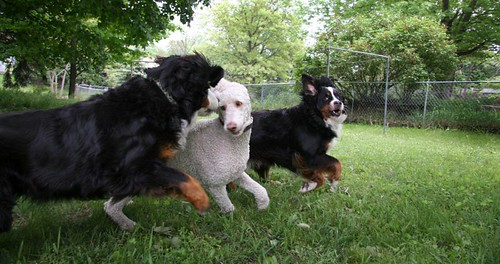 delacroix dogs | by trailerafire