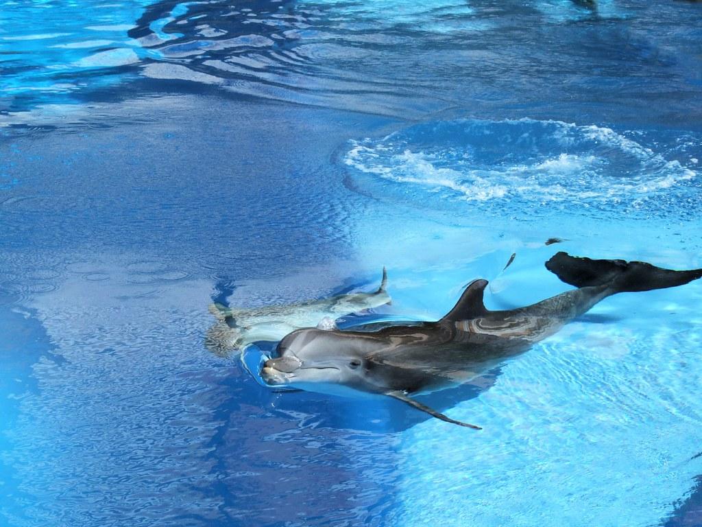 "Las Vegas - Mirage ""Secret Garden"" Dolphins #2"