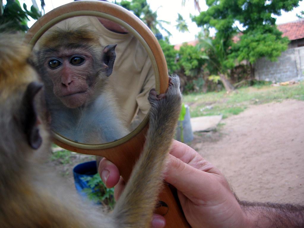 Картинки смешные с зеркалами, анимации надписями