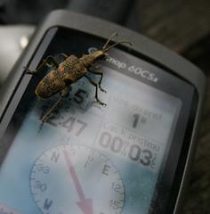 Zvědavý GPS brouk/GPS bug
