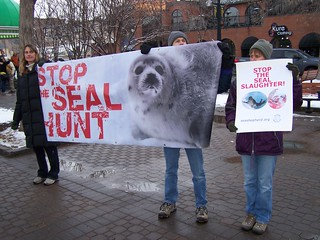 Stop seal hunt / Stop the seal slaughter | by thivierr