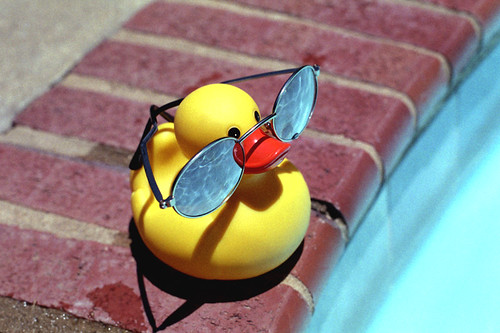 Mr Ducky goes to the Pool | by robertrice