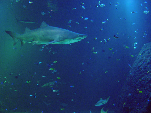 Shark Tank | by jonas_l