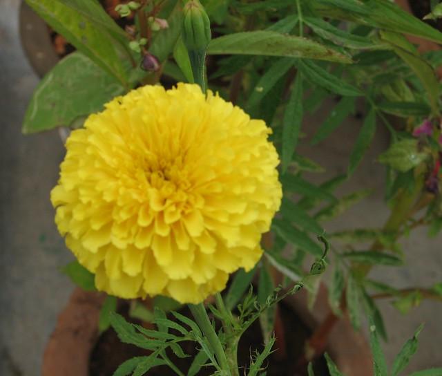 my second flower