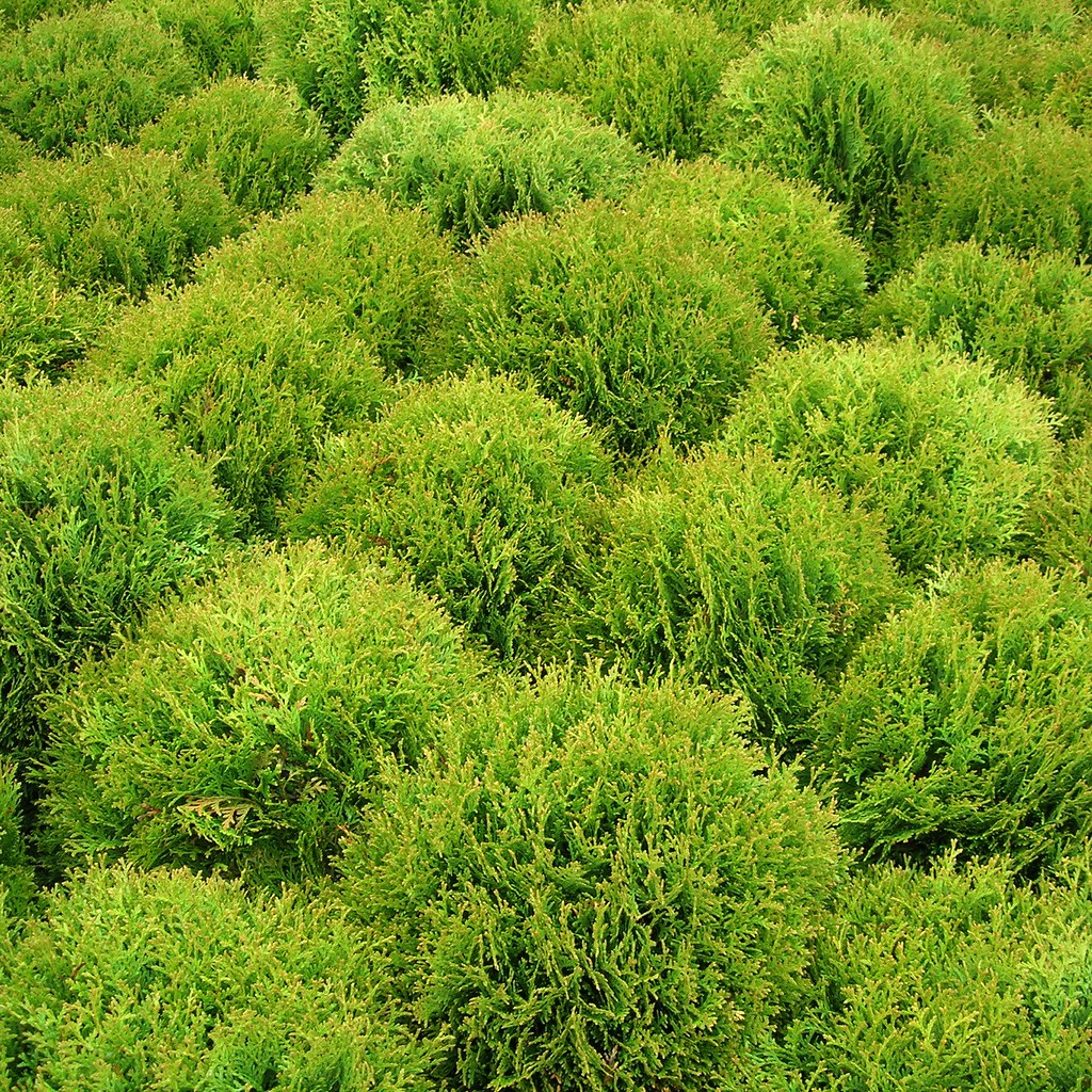Bushes Array Of Bushes At The Garden Centre Dano Flickr