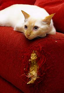 Arte Felina [Cat Art] | by Jim Skea