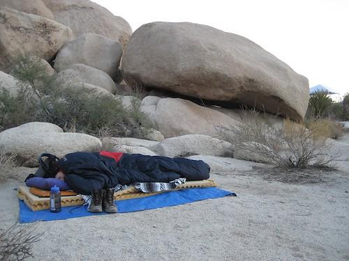 california park usa tree desert joshua joshuatree national twentyninepalms joshuatreenationalparkdeserthikingcampingindiancove