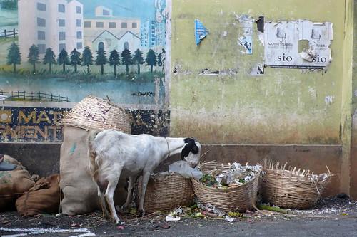 Garbage Man, Cochin   by stevenewleaf