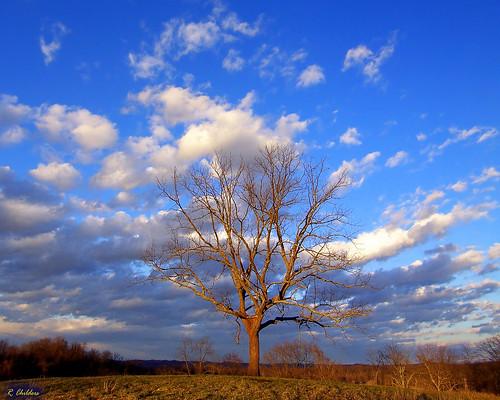 winter sky sunlight tree nature proud clouds landscape geotagged golden evening scenery pretty walnut wv westvirginia tall independence mothernature hilltop bigmomma aw3 flickrific rcvernors diamondclassphotographer eliteimages