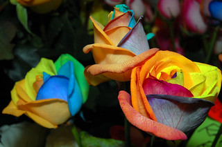 Multi Colored Roses | by ZakVTA