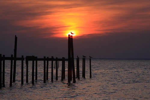 blue sunset orange water birds silhouette yellow canon pier alabama fairhope eos50d sunsetsandsunrisesgold