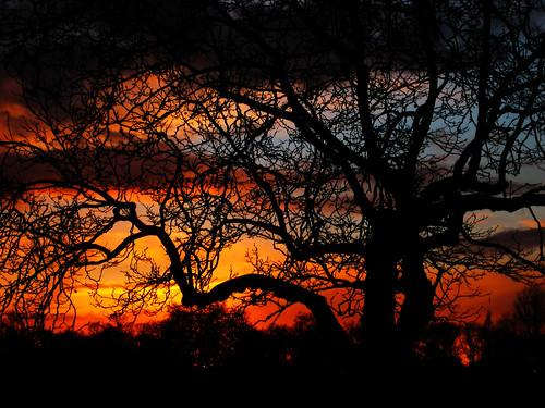 uk sunset england sky tree london westminster silhouette clouds canon europe ixus hydepark londonist simoncrubellier ixus70