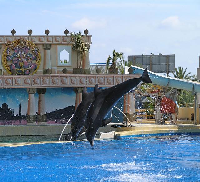 Marineland - dolphin jump