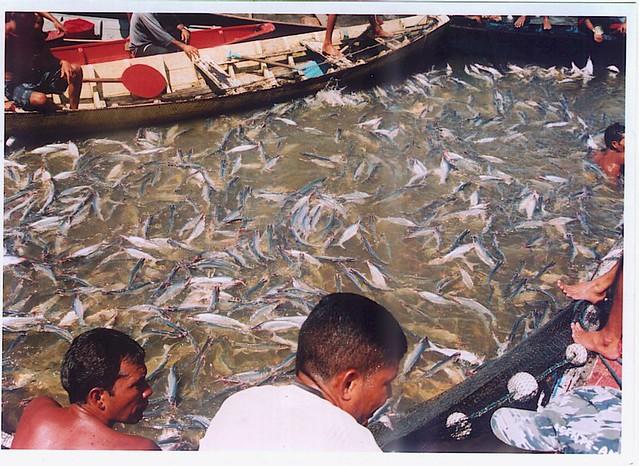 Pesca do Mapará