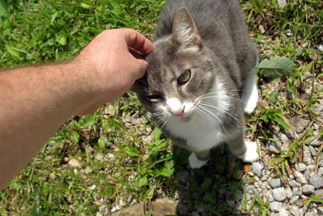 Nice Kitty, Rushing Springs School, Overton Co, TN