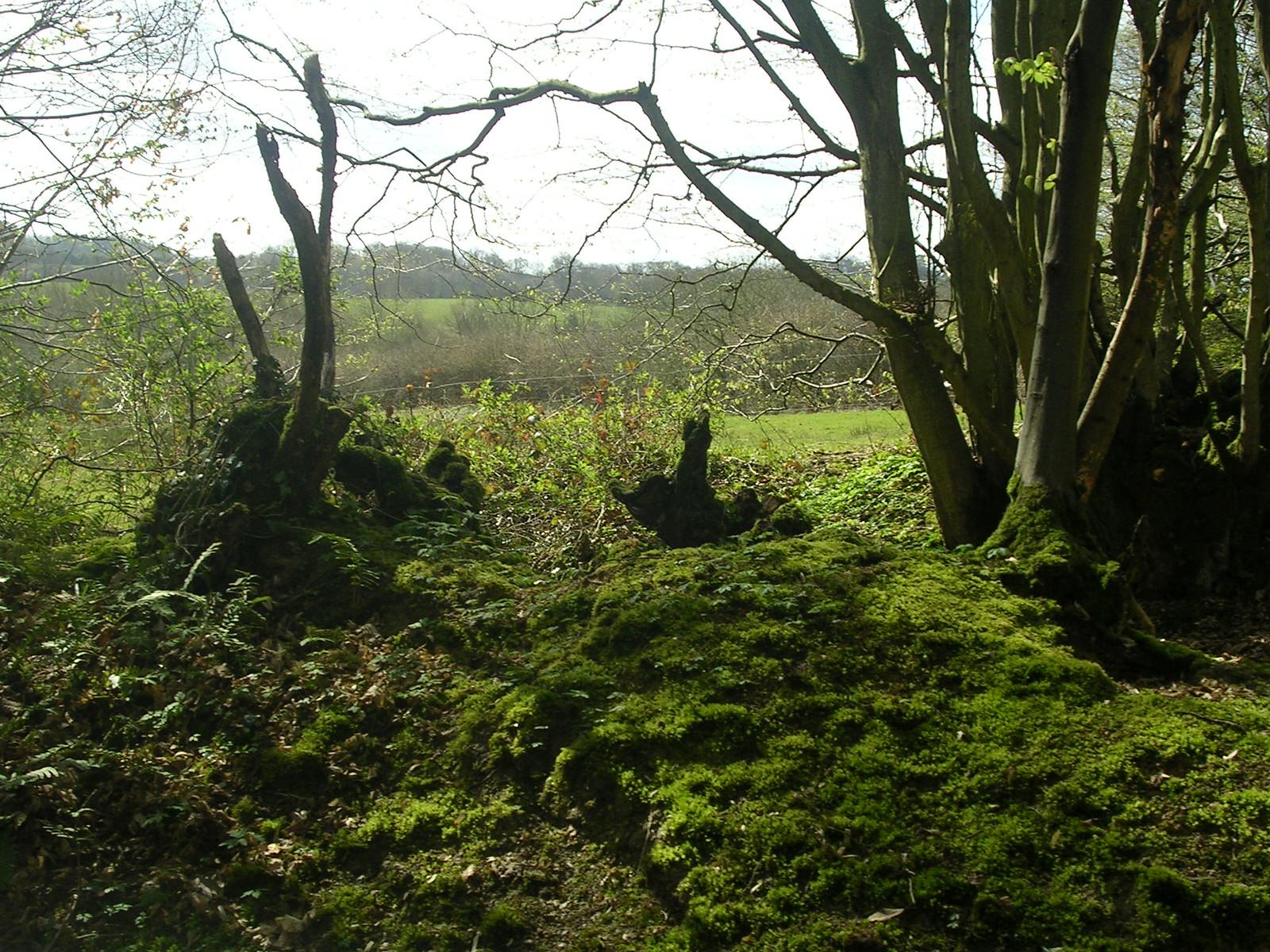 Old hedgerow Robertsbridge to Battle