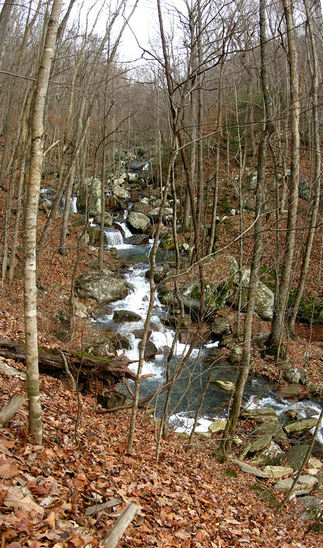 Laurel Creek Looking North-East, Virgin Falls, White Co, TN